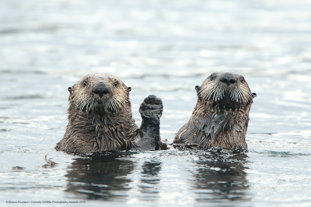 Otters looking stunned