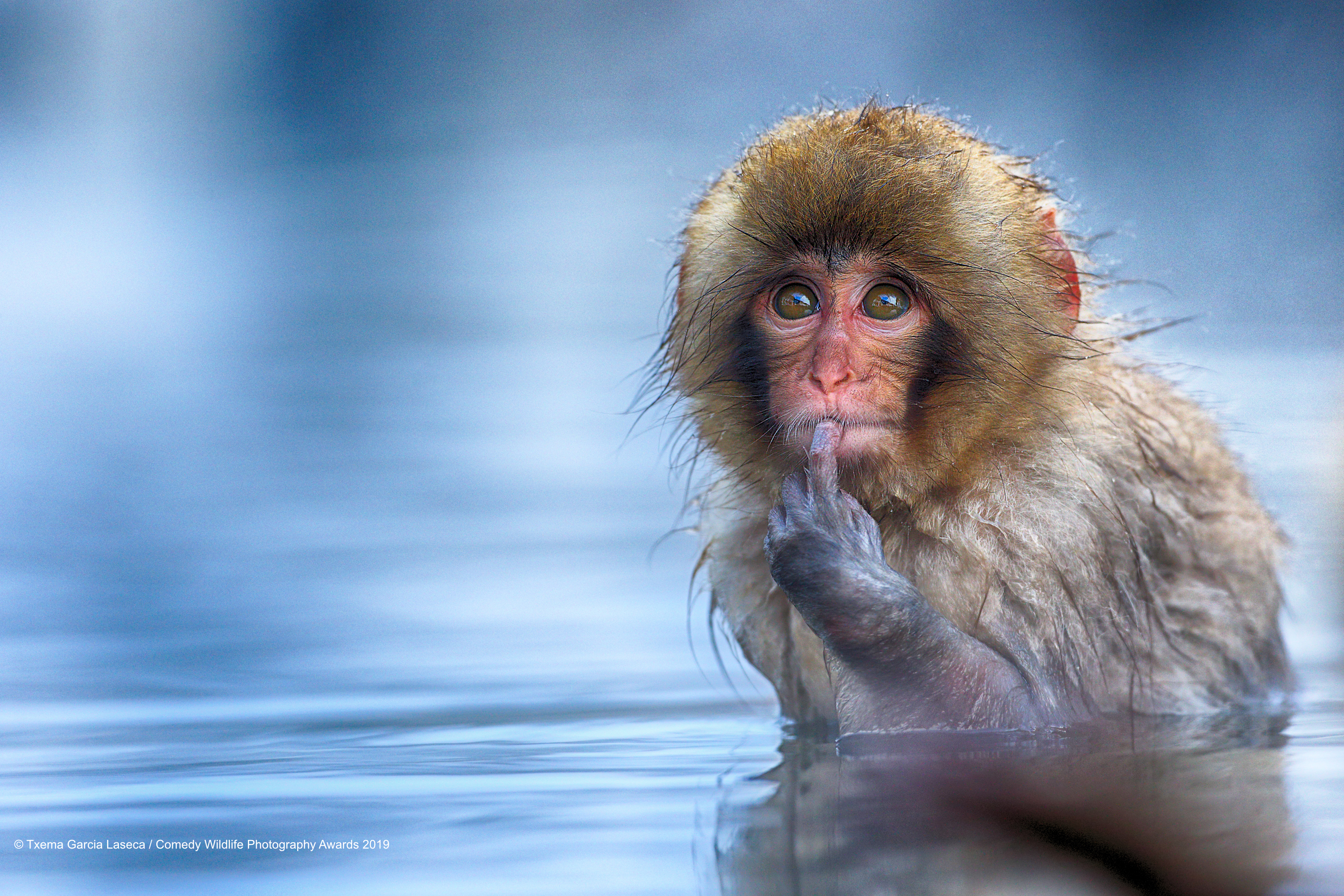 Snow monkey in deep thought.